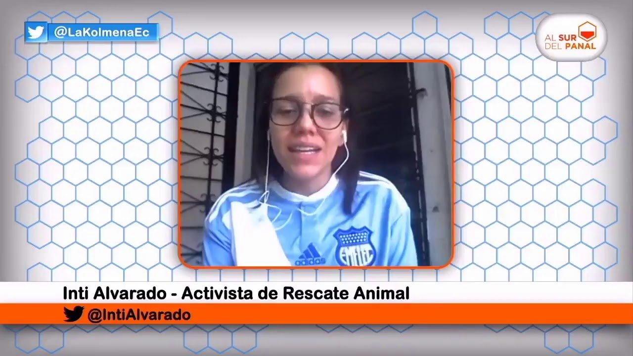 Al Sur Del Panal – Entrevista A Inti Alvarado, Activista De Rescate Animal Ecuador